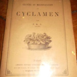 CULTURE ET MULTIPLICATION dU CYCLAMEN par J.A.G