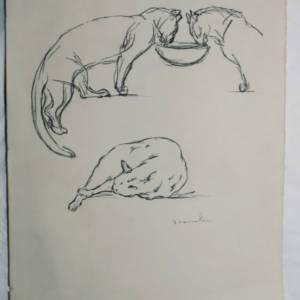 STENLEIN Chats dessin original 25 x 33 cm